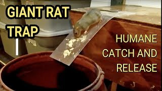 Best Mouse Trap Ever DIY Humane Mousetrap Green Rat Trap for capture and release Rat Eats Moth thumbnail