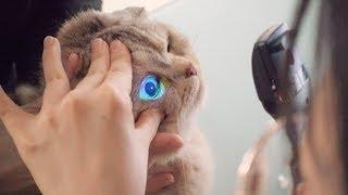 고양이가 눈병이 걸렸어요