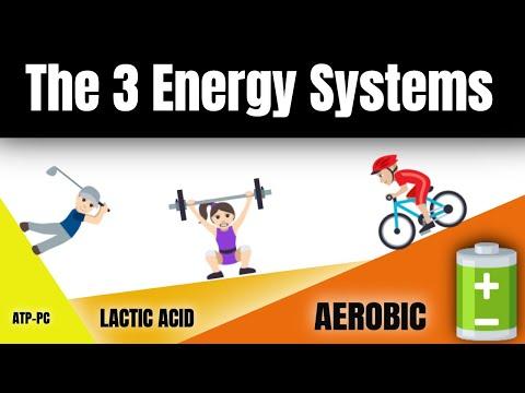 Learn the 3 Energy Systems   PE Buddy