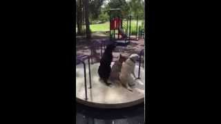 Around We Go - Red Dog - Jordan Dog Training