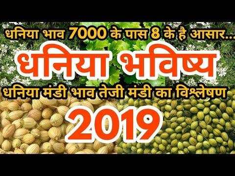 Dhaniya Bhav 2019 में रिकॉर्ड तोड़ेगा - धनिया भाव तेजी मंदी रिपोर्ट | रामगंज Dhaniya Mandi