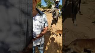 Cavalgada com Santos Drumond Andrade