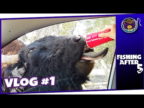 It Tried To Open The Door!! Harmony Park Safari Adventure! - Huntsville AL