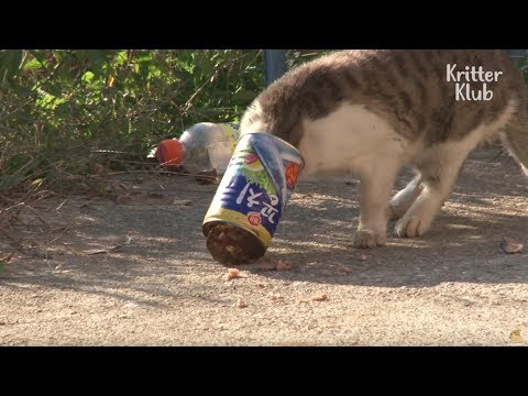 Cat Struggles To Eat Because Of A Food Can | Animal in Crisis EP9