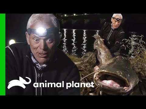 Is This 7ft Fish The Real Monster Of Lake Garda? | Jeremy Wade's Dark Waters