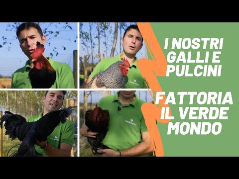 Le Galline Felici - Video Piccione n.1 from YouTube · Duration:  9 minutes 2 seconds