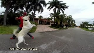 Спецвыпуск из Майами С.Ш.А.(Агрессия на собак)