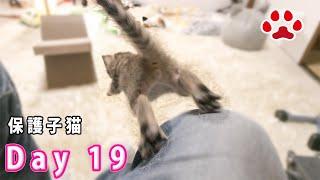 19日目 ジャンプする子猫のかわいい後ろ姿と猫たちとの様子 【瀬戸のここ日記】