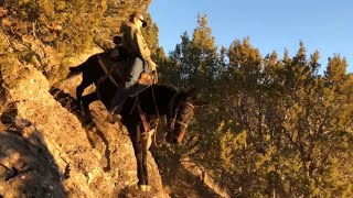 Extreme Mule Riding- Cache Valley Rocky Mountain Edition