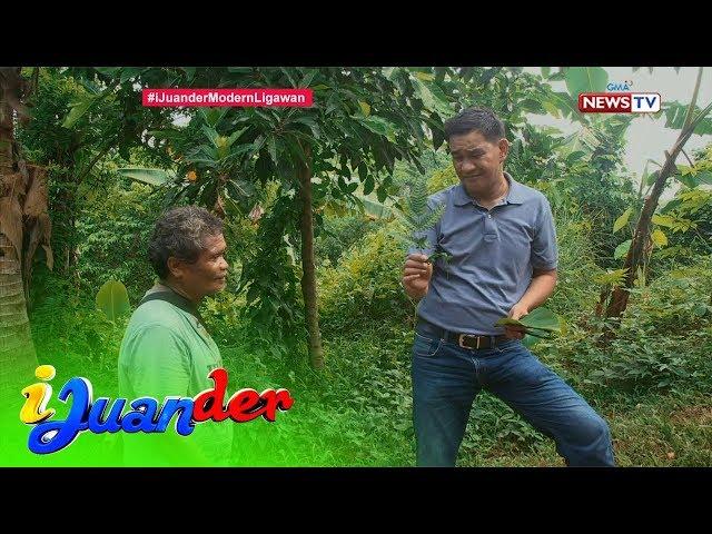 iJuander: Tradisyunal na panliligaw ng mga katutubong Dumagat, alamin!