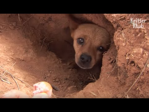 Dog Living Inside The Grave Is Hiding 'This' From People | Kritter Klub