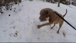 CUTE DOG VS. SNOWMAN