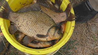 Рыбалка на донные снасти Караси клюют дуплетом My fishing