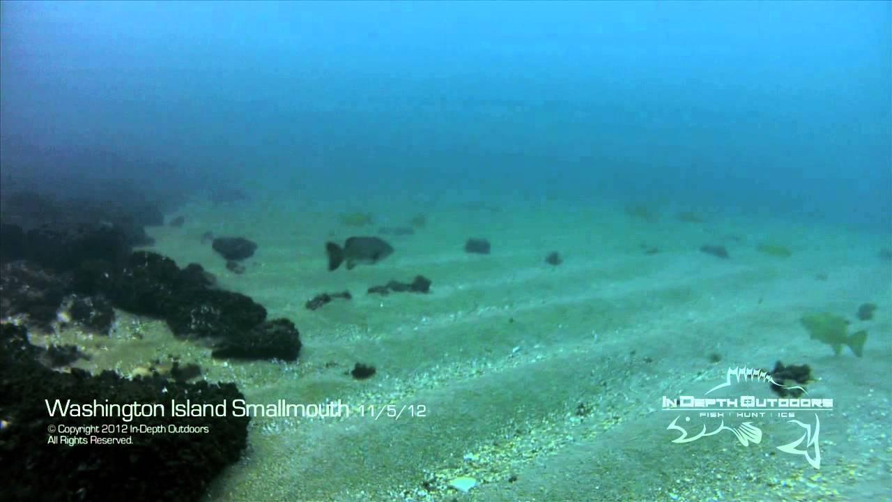 Web Only - Underwater Bass Video from Washington Island on Lake Michigan