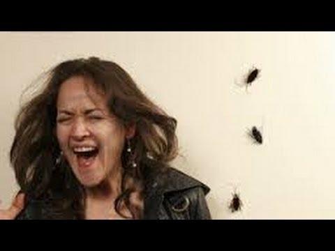 COMO ELIMINAR LAS CUCARACHAS. Sin insecticidas