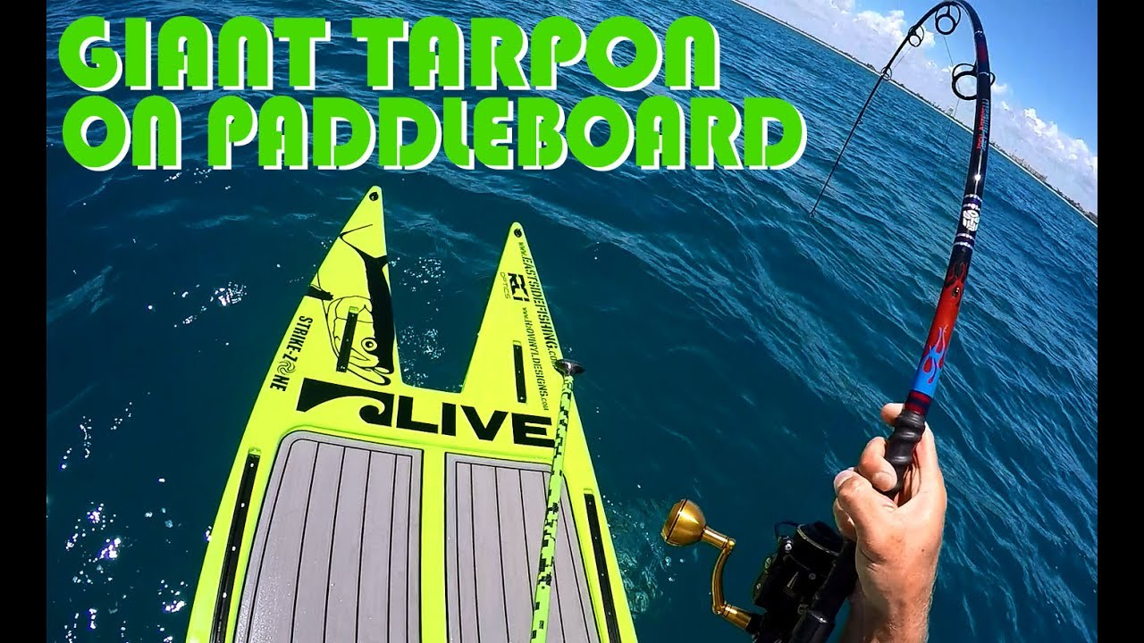Giant Tarpon Sight Fishing on Live Watersports SUP – whole