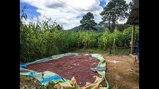 Global Food Assistance Outlook Brief (September 2017)
