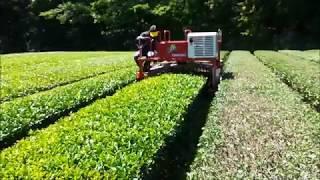 乗用型摘採機によるお茶の木の剪定2018.6