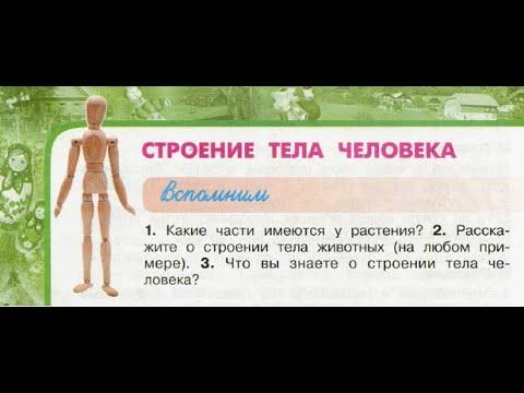 """Окружающий мир 3 класс ч.2, Перспектива, с.48-51, тема урока """"Строение тела человека"""""""