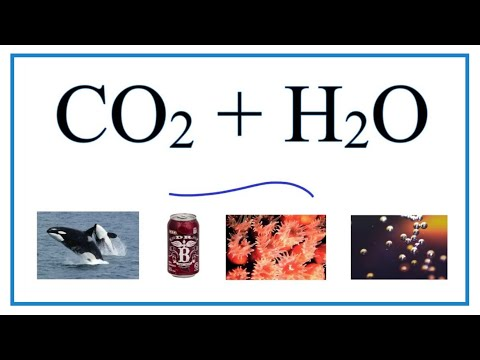 CO2 + H2O  (Carbon Dioxide + Water)