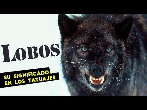 Tatuajes De Lobos Y Su Significado Youtube