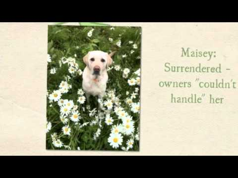 DuPage County Animal Care & Control Overview Video