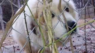 20140225 071556 Dog Barking For @ A Year First Meeting