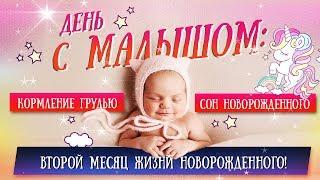 День с малышом: кормление грудью и сон новорожденного + купание младенца
