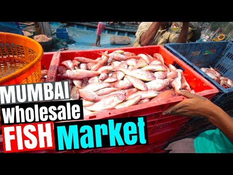 WHOLESALE FISH MARKET In Mumbai (Sassoon Docks Wholesale Fish Market)