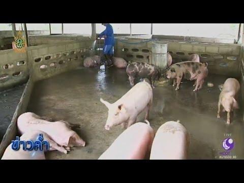 ฟาร์มหมูตัวอย่าง Smart Farmer