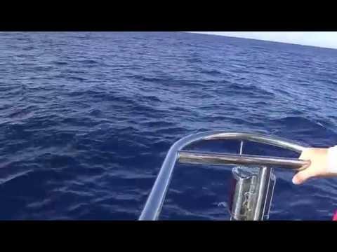 HUGE Pod of Dolphins! S/Y Indigo V Cruising Indian Ocean