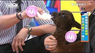 本集完整內容:https://youtu.be/vSLy-UXuVMg 【上班這黨事】 TVBS歡樂...