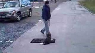 Off Leash Dog Training (k9-1.com)