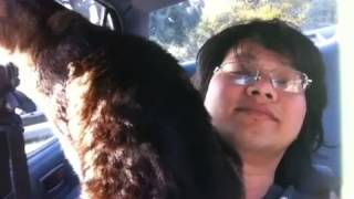 Chú mèo hoang lại quậy :).