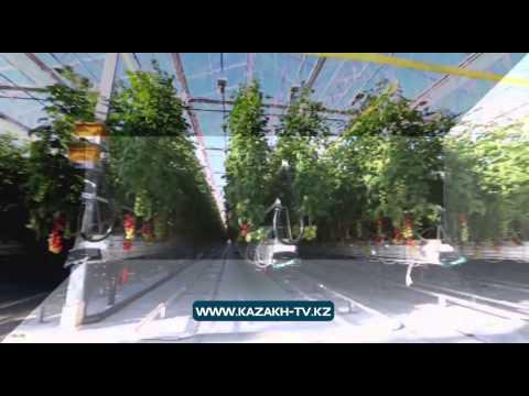 'Innovative Kazakhstan'