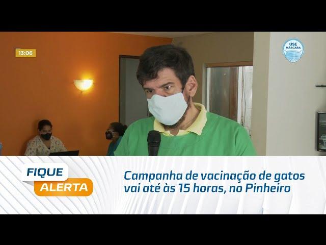 Campanha de vacinação de gatos vai até às 15 horas, no Pinheiro