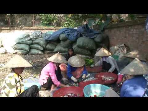 Du lich Viet Nam 24