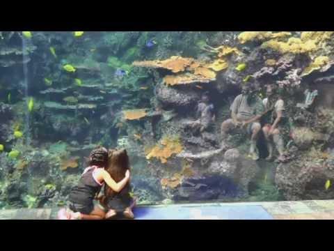 Atlanta Georgia Aquarium World