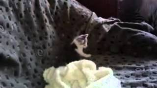 Отдам в хорошие руки котенок бесплатно видео
