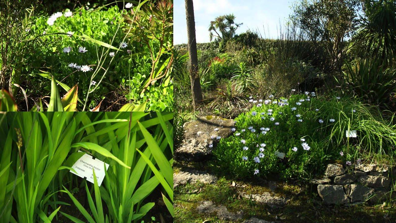 Visite jardin exotique roscoff youtube for Jardin exotique