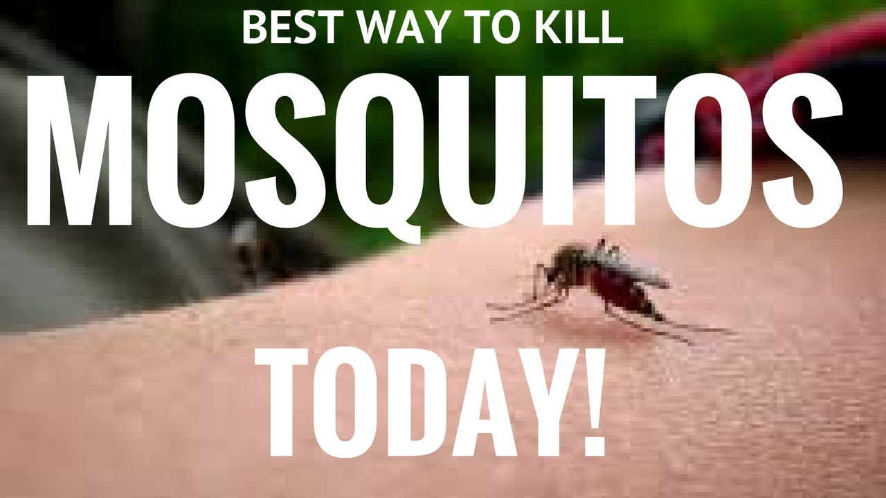 Best Way To Kill Mosquitoes And Easy In Charleston