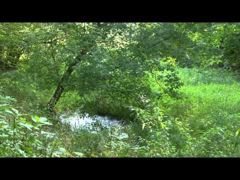 Naturschätze in Potsdam-Mittelmark - Das Bäketal