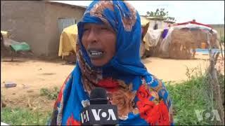 La vie des éleveurs nomades à N'Djamena au Tchad (vidéo)