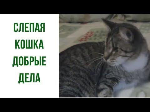 Видео Зрение у котов