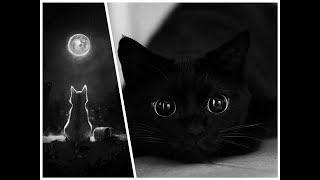 Black Cat Funny, Black Cat Spring