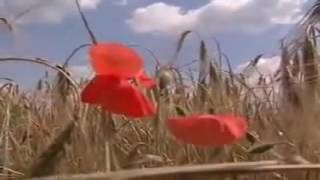 Anthem of the USSR - Ukrainian version