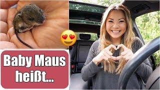 Baby Maus bekommt einen Namen 😍 XXL dm Haul | Justus der MacGyver | Familienleben VLOG | Mamiseelen