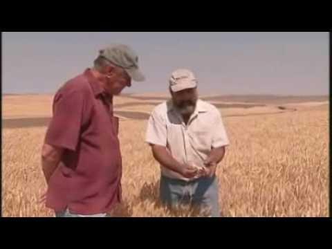 Wheat Harvest In Washington State - America's Heartland