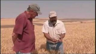 Wheat Harvest in Washington State - America