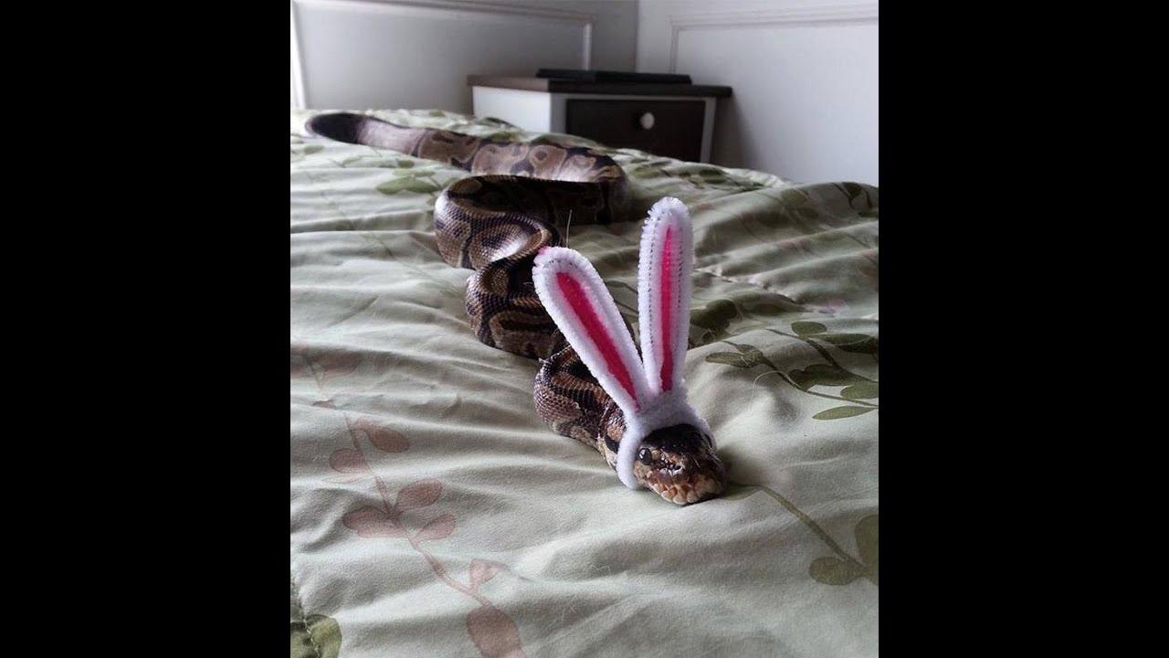 люди змея с ушами зайца картинка первой цепи